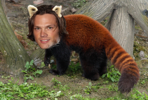 jaRED PANDAlecki